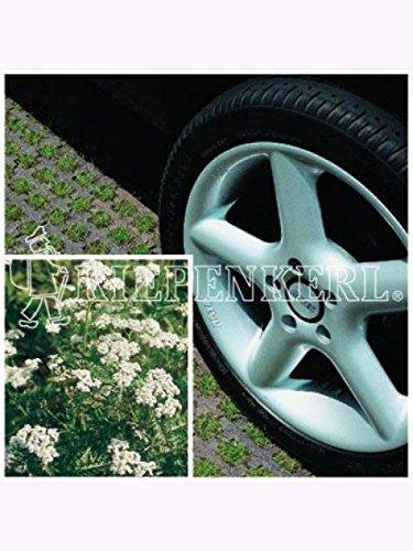 DSV-Rasensamen 5.1.1 Parkplatzrasen mit 2% Achillea 10kg