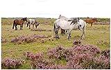 Cormorant and Freedom Herd of Wild Stock Pictures Kit de pintura por números sin royalties para adultos, niños, bricolaje, cuadro de arte de pared, lienzo enmarcado, pintura al óleo