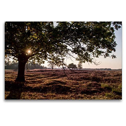 CALVENDO Premium Textil-Leinwand 120 x 80 cm Quer-Format Lüneburger Heide bei Schneverdingen/NI, Leinwanddruck von Katrin Streiparth