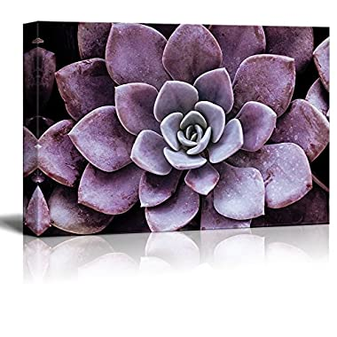 wall26 Canvas Wall Art - Closeup of a Purple Succulent Plant - Giclee Print Gallery Wrap Modern Home Decor Ready to Hang - 24  x 36
