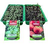 KliKil kit fai da te l'orto in casa che comprende 2 mini serra da 24 celle + 2 Buste di Semi selezionati della Blumen di Pomodoro Cuore di Bue e di Basilico Italiano