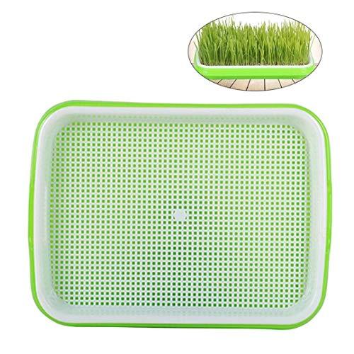 Growkits Seed Sprouter Tray Bodenfreier PP Healthy Wheatgrass Grower in Lebensmittelqualität