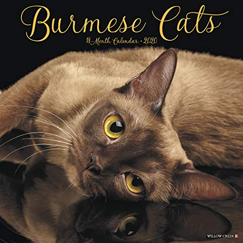 Willow Creek Press: Burmese Cats 2020 Wall Calendar