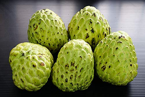 GETSO Semi Pacchetto: 5 Semi SweetSeeds CustardSugar Cherimoya Fruit Dilicious D114