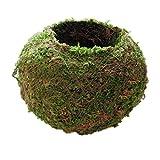 HomeDecTime 9cm-18cm De Diámetro. Moss Weaved Ball Shape Flower Pot Maceta Suculenta Cesta Verde - Verde, 9cm