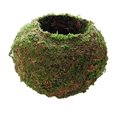 Baoblaze Kreative Moos-Pflanzschale Kugel from - 12 cm