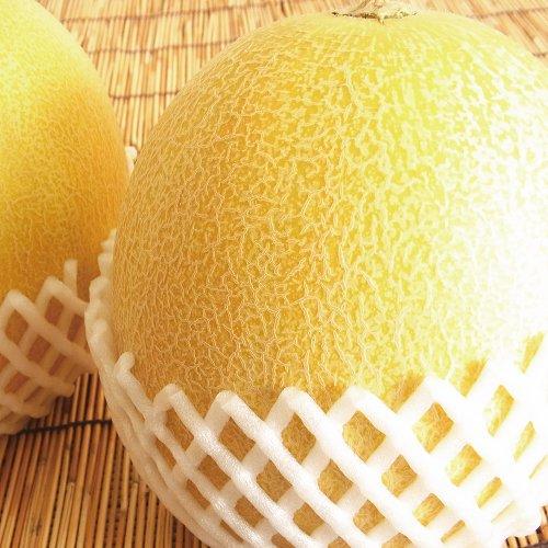 """★完熟収穫★""""秀品""""大玉『あおもりメロン』 1.2kg超×2玉詰(計2.4kg超)"""