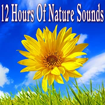 12 Hours of Nature Sounds