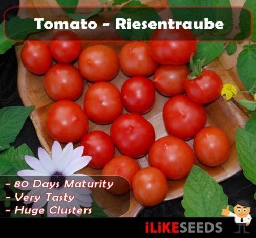 """Tomate """"Riesentraube"""" Erbstück. 20 Samen Minimum. Gemüsegarten Pflanzen."""