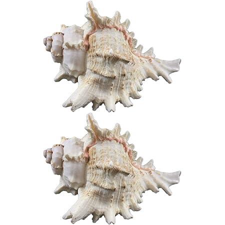 VOSAREA 2pcs 6-9cm Gros Coquillages naturels conque Aquarium décoration de la Maison