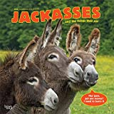 Jackasses 2020 12 x 12 Inch Monthly Square Wall Calendar, Donkey Humor