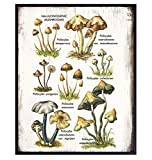 Psychedelic Hallucinogenic Medicinal Magic Mushrooms Botanical Prints Art - Psilocybin Spores Trippy Wall Decor - Pshycadellic Room Decor - Vintage Retro Rustic Sign Plaque Poster for Kitchen, Dorm