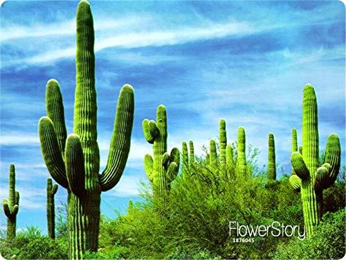 HONIC Verlust Förderung! Succulents Bonsai tubiflora, Garten, seltene Blumen, etwa 100 Pflanzen/Pack, 3809E5