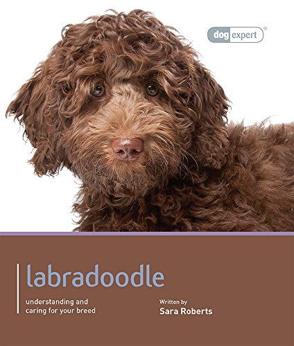 Labradoodle - Dog Expert