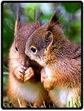Cute Squirrel Design Throw Blanket Fleece 58' x 80' (Large)