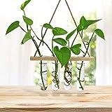 æ— Floreros colgantes de cristal para colgar en interiores, tubo de ensayo de flores, florero, plantas de aire,...