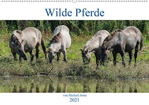 Wilde Pferde von Michael Jaster (Wandkalender 2021 DIN A2 quer)