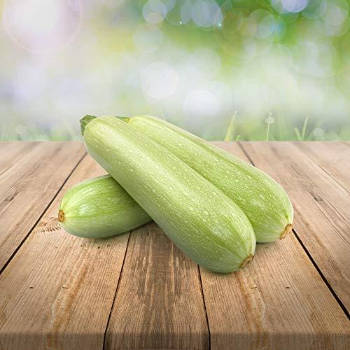 """weiße Zucchini\""""Long White Bush\"""" 25 x Samen aus Portugal 100{da5fba0269ab18845558667b771d338b168af33536706a026609772f733cab80} Natur/Massenträger ideal zum Grillen und Einlegen (weisse Zucchini)"""