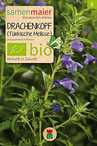 BIO Drachenkopf (türk.Melisse) (Dracocephalum moldavica)