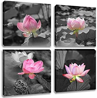 Best white lotus flower pictures Reviews