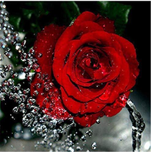 Heiß DIY 5D Diamant Malerei Kit Kristalle Diamant Stickerei Strass Malerei Kleben Malen nach Zahlen Stich Kunst Kit Zuhause Dekor Mauer Aufkleber - Wasserr Rote Rose, 30x30cm