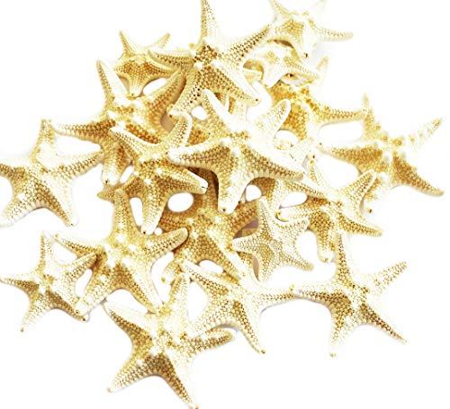 Set of 24 Tiny White Knobby Starfish for Beach Wedding Crafts and Decor 1 1/2' - 2 1/4' Nautical Coastal Beach Cottage Decor