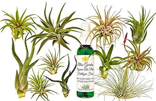 FERRY Bio-Saatgut Nicht nur Pflanzen: 11 Rare Air Tillandsien mit Flasche Bio-Lebensmittel