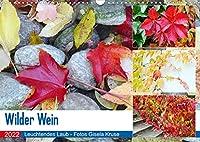 Wilder Wein Leuchtendes Laub (Wandkalender 2022 DIN A3 quer): Die Selbstkletternde Jungfernrebe betoert im Herbst mit ihren strahlenden Blaettern (Monatskalender, 14 Seiten )