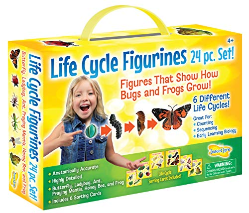 Insect Lore Life Cycle Figurines 24 Pc Set