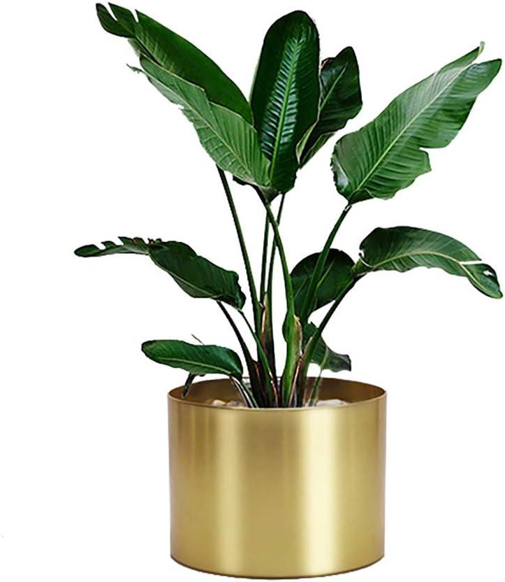 Rising Star Max 82% OFF supreme Golden Metal Plant Pot 6