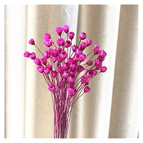 THQC Getrocknete Blumen 30 / STK dekorative Trockenblumen Mini Daisy Kleine Stern Blumenstrauß Natural Plant Blumen for Hochzeit Home Decoration 0.5cm Preserve (Farbe : Rose Red)