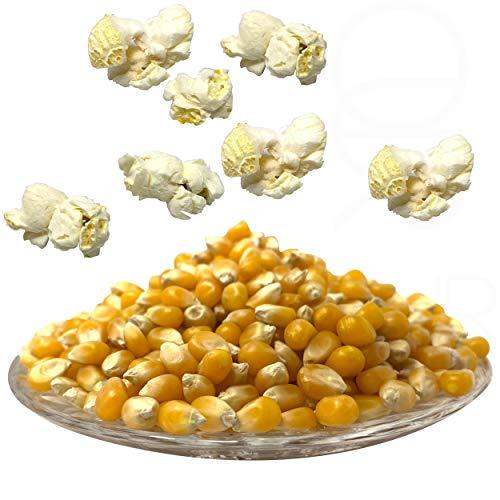 Premium Butterfly Popcorn Mais 1:50 Popvolumen Profi Mushroom Popcorn Mais geeignet für Backofen, Cretors Popcornmaschine und Mikrowellen