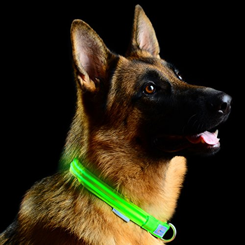Pet Industries USB Rechargeable LED Dog Collar with Quick Release Metal Buckle...
