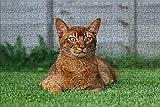 LHJOY Puzzles Adultos Puzzle 1000 Piezas Animal de Color Gato Regalo de cumpleaños 75x50cm
