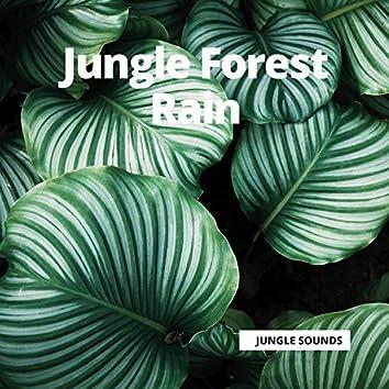 Jungle Forest Rain