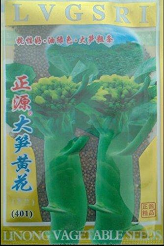 25 Gramm/Originalverpackung Das schnelle Wachstum von Wärme und Kälte hoher Ausbeute, Chinakohl Samen Bonsai Pflanze DIY Hausgarten