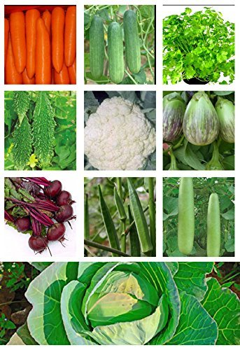 Tradico Imperial Gemüse Samen Combo von 10 in 1 - Rote Bete + Bhindi/Lady Finger + bitterer Kürbis + Flasche Kürbis + Brinjal + Kohl + Karotte + Blumenkohl + Koriander + Gurke