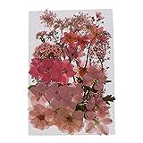 dailymall Gepresste Blumen Getrocknete Blätter Echte Trockenpresse Blumen Dekoblätter zum Basteln für Kunst Basteln DIY Harz Scrapbooking, Karten Machen - Rosa