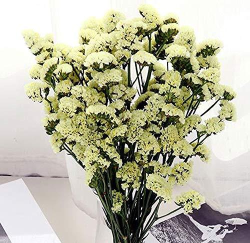 30 Blanc Pur Heirloom Forget-me-not//Vivace Fleur Graines
