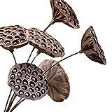 DENISFEN Flores secas de loto con semillas de loto, flores eternas, arreglo floral para boda, decoración del hogar, paquete de 6