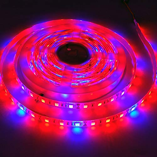 H/A CAXVYK Full Spectrum Led Plant Grow Light Strip DC12V Plants Growing Growth Lamp For Greenhouse Hydroponic Plant Aquarium Lighting CAXVYK (Color : Non Waterproof, Emitting Color : 3 Red 1 Blue)