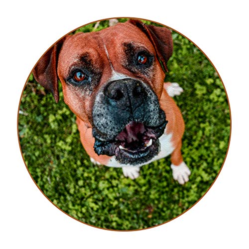 Custom Coasters Animal Dog Brown Drink Coaster (6-Piece Set), Housewarming Hostess Gifts Decor, Wedding Registry, Room Decorations, Customizable Picture and Text 4.3 in