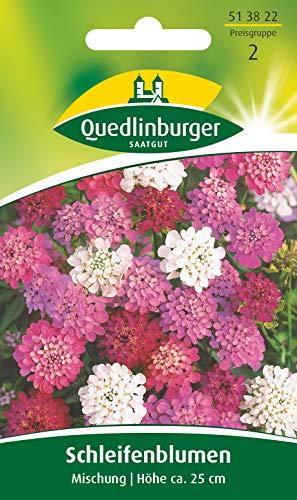 Schleifenblumen, Iberis umbellata, ca. 80 Samen