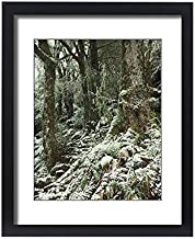 Media Storehouse Framed 20x16 Print of Cool Temperate Rainforest in Winter with Soft Tree Fern (Dicksonia (19128288)