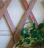 VERDELOOK Traliccio Estensibile in Legno Naturale, 100x200 cm, Decorazioni terrazza