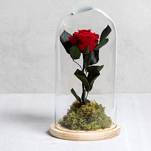 Rosa eterna - Rosa Natural liofilizada - Envío 24H Gratis -Regalo San Valentín- Tarjeta dedicatoria incluida de Regalo...(Rojo)