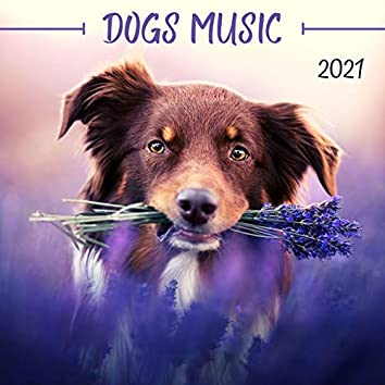 Dogs Music 2021: Relaxing Music to Calm your Pets, Stress Relief Sounds
