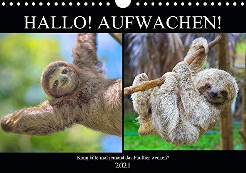 Hallo! Aufwachen! Kann bitte mal jemand das Faultier wecken? (Wandkalender 2021 DIN A4 quer)