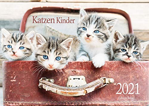 Edition Seidel Katzen Kinder Premium Kalender 2021 DIN A3 Wandkalender Katzenkalender