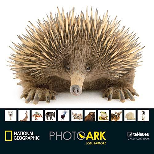 CALENDRIER 2020 NATIONAL GEOGRAPHIC ANIMAUX PROTEGE - ark photo - espece voie disparition- FORMAT 30x30cm (TN) + offert un agenda de poche 2020